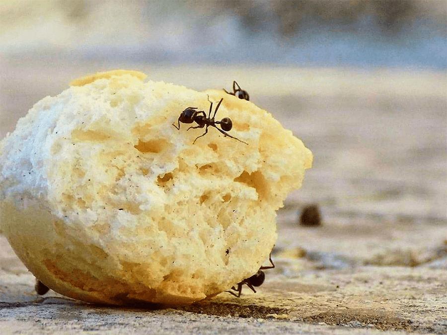 муравьи дома