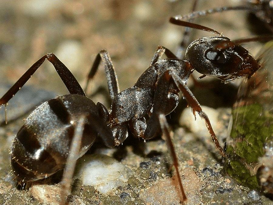 спасение от насекомых