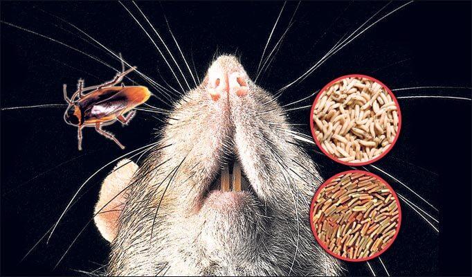 мыши-зараза